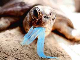 tortuga-plastico